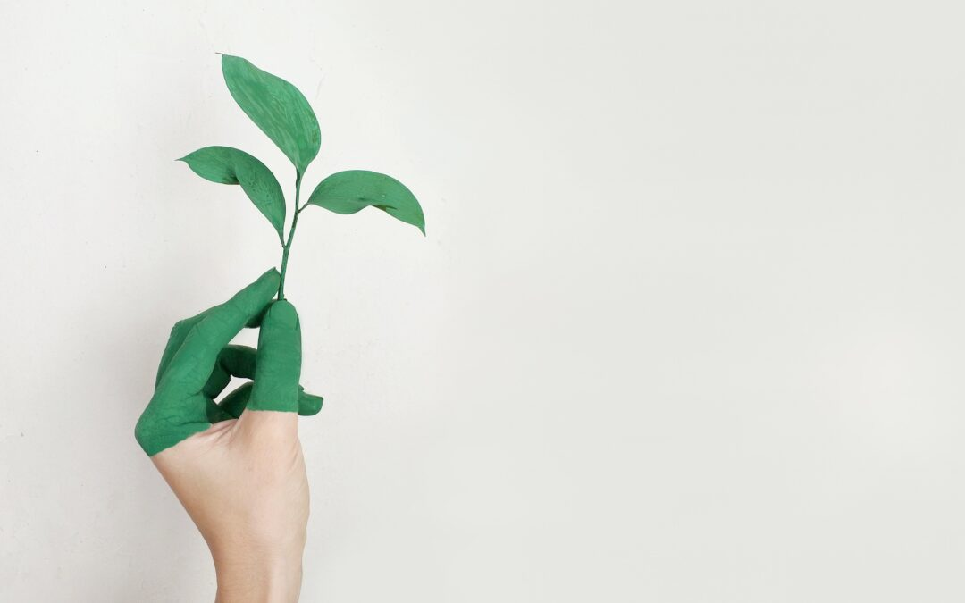 Tessiant's Journey To Becoming Socially Responsible & Sustainable