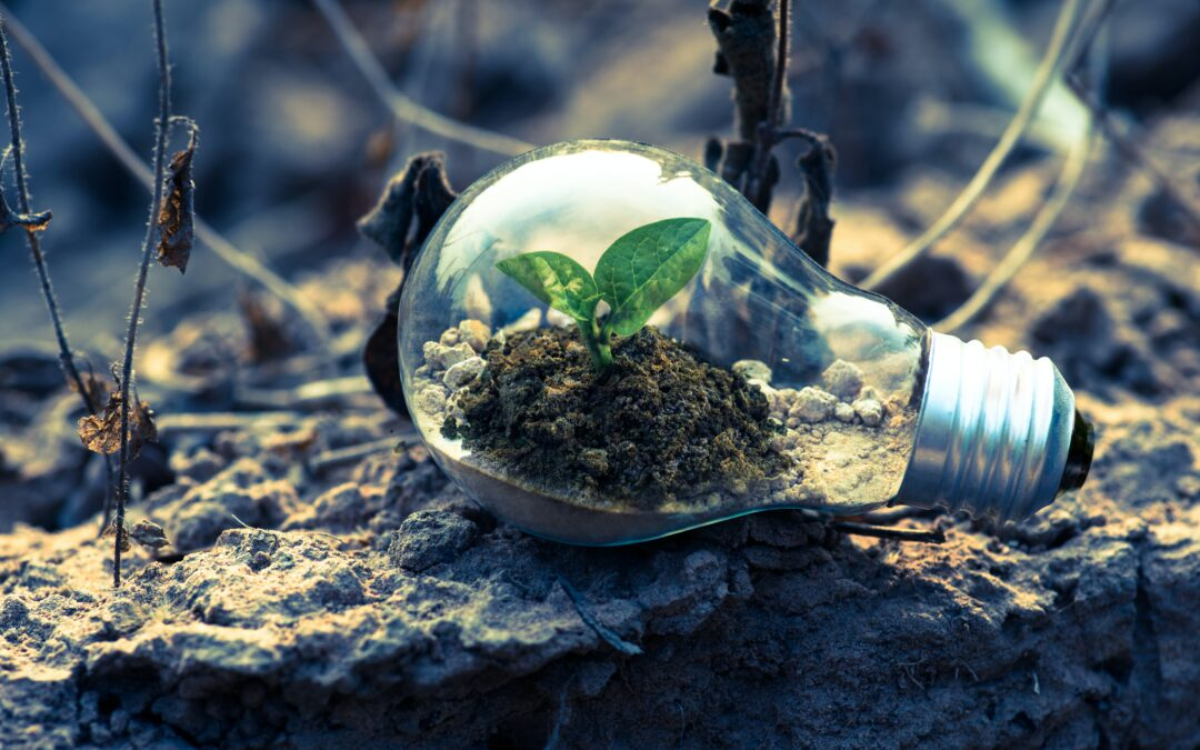 Building Sustainability Into Your Business Strategy